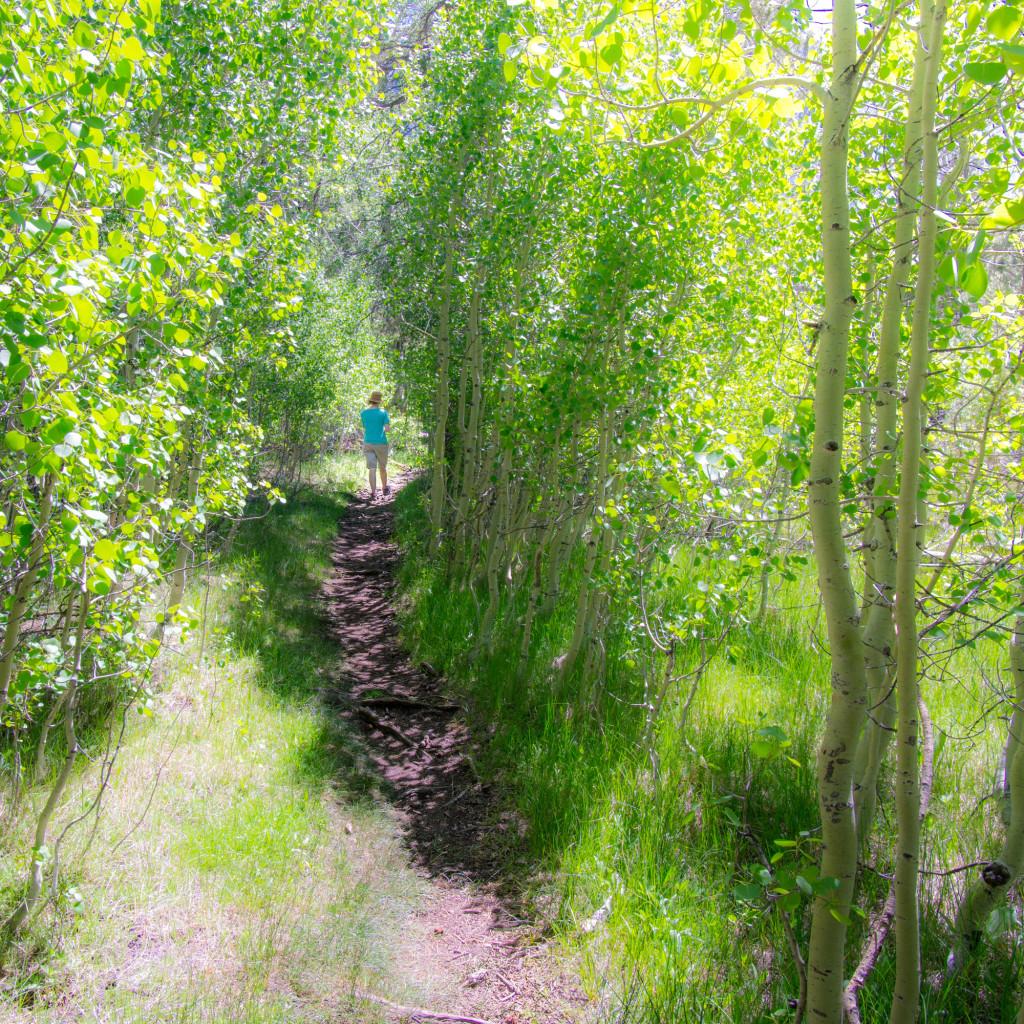 Aspens on Parker Lake Trail