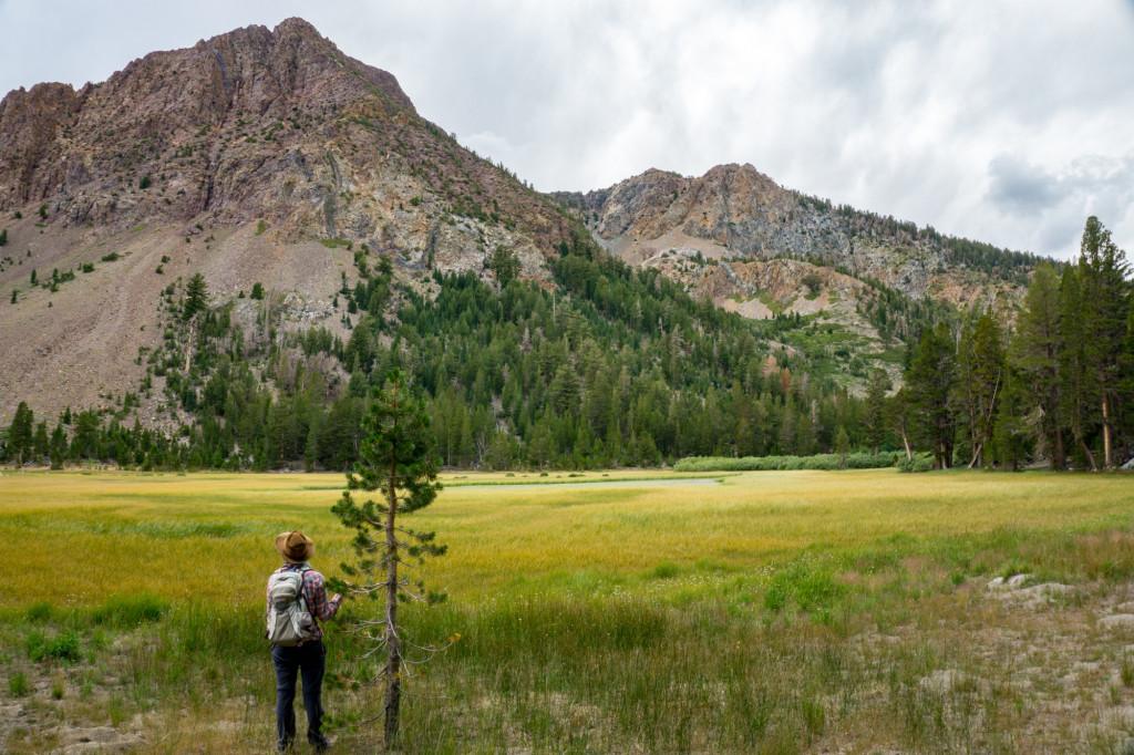 Yost Meadow